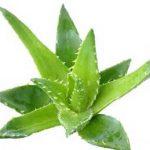 قویترین نسخه های گیاهی برای درمان آکنه های قرمز